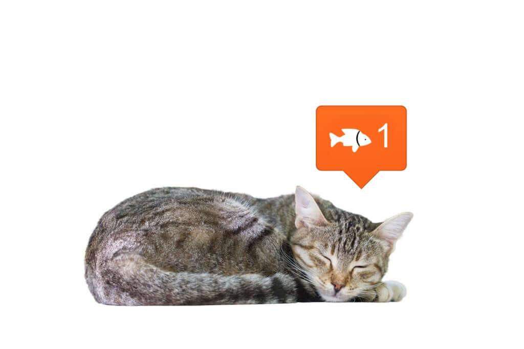 As redes sociais mudam a nossa percepção dos animais