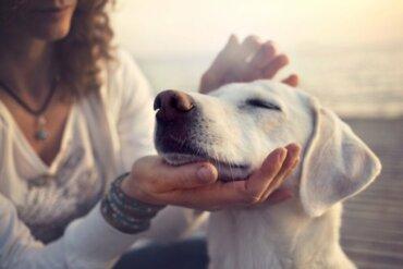 Emergências respiratórias: dispneia em animais de estimação