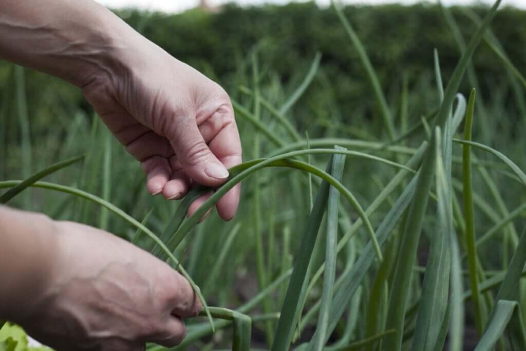 O que é a agroecologia?
