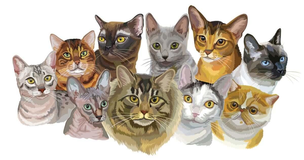 Sobre o gato e a sua domesticação