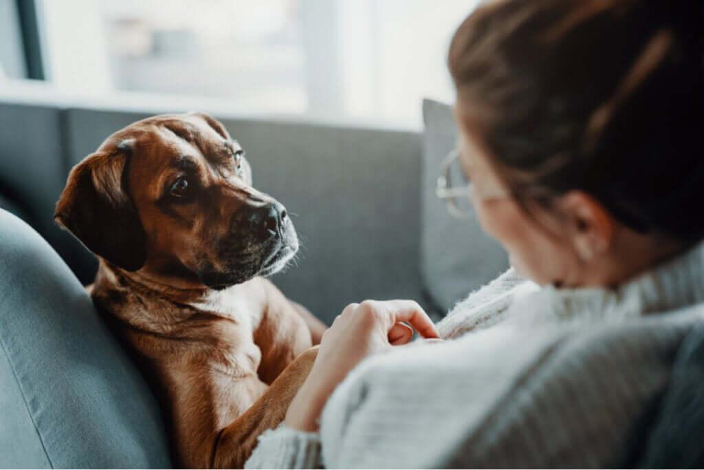 Doenças que causam dificuldade respiratória em cães