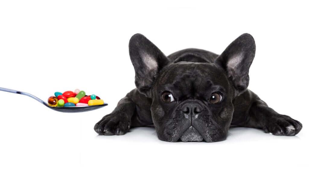 Quais vitaminas são essenciais para os cachorros?