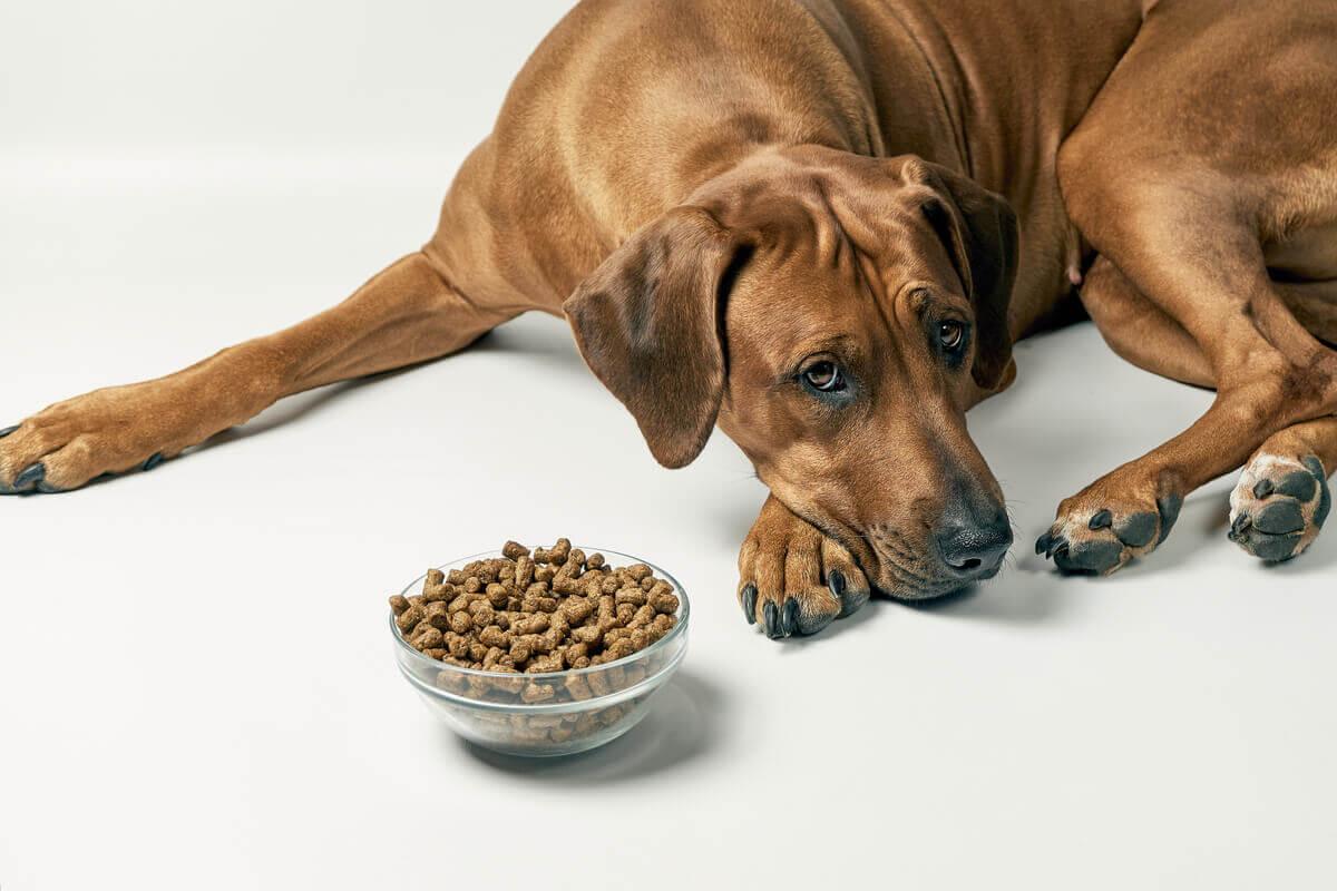 Alergia alimentar em animais de estimação