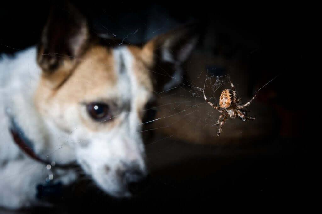 Sintomas de picadas venenosas em cães