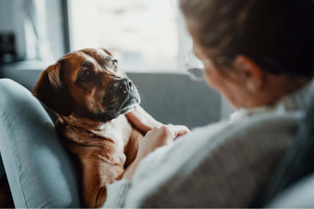 Três tratamentos para a pneumonia em animais de estimação