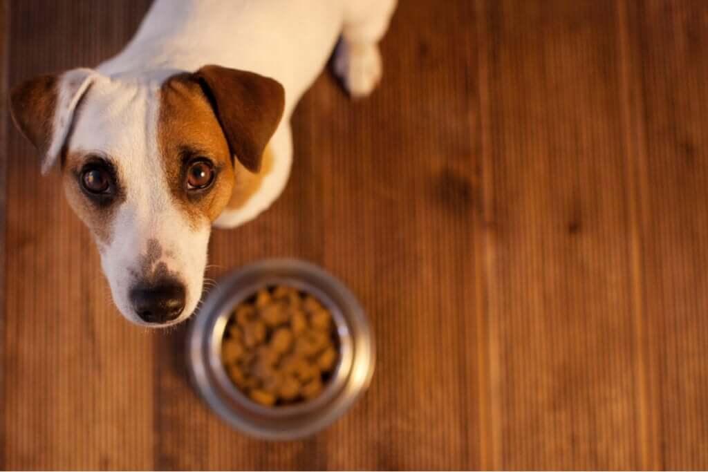 Alergia alimentar em animais de estimação: como saber?