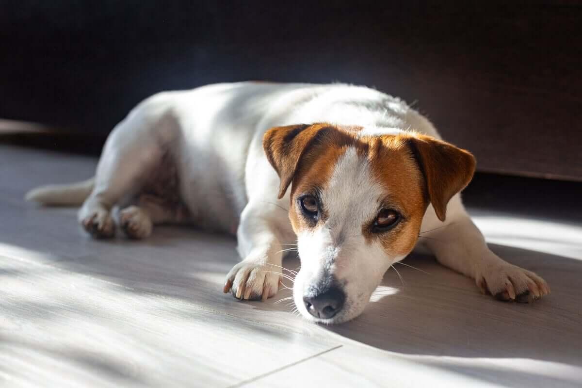 os benefícios do sol para os animais de estimação