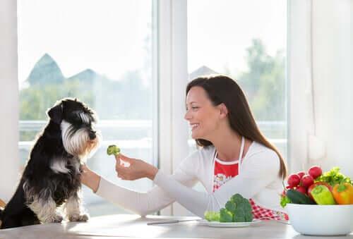 Os cães podem comer vegetais?