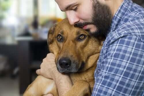 Principais causas de câncer em cães