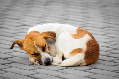 Vantagens de esterilizar um cão