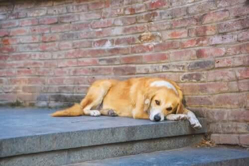 Comportamento de um cão não esterilizado
