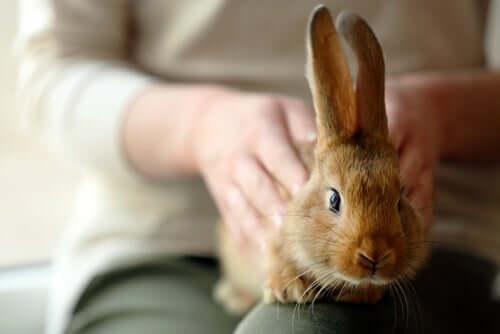 Evite situações em que seu coelho possa te morder
