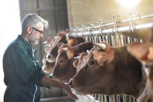 Impacto das doenças emergentes na pecuária