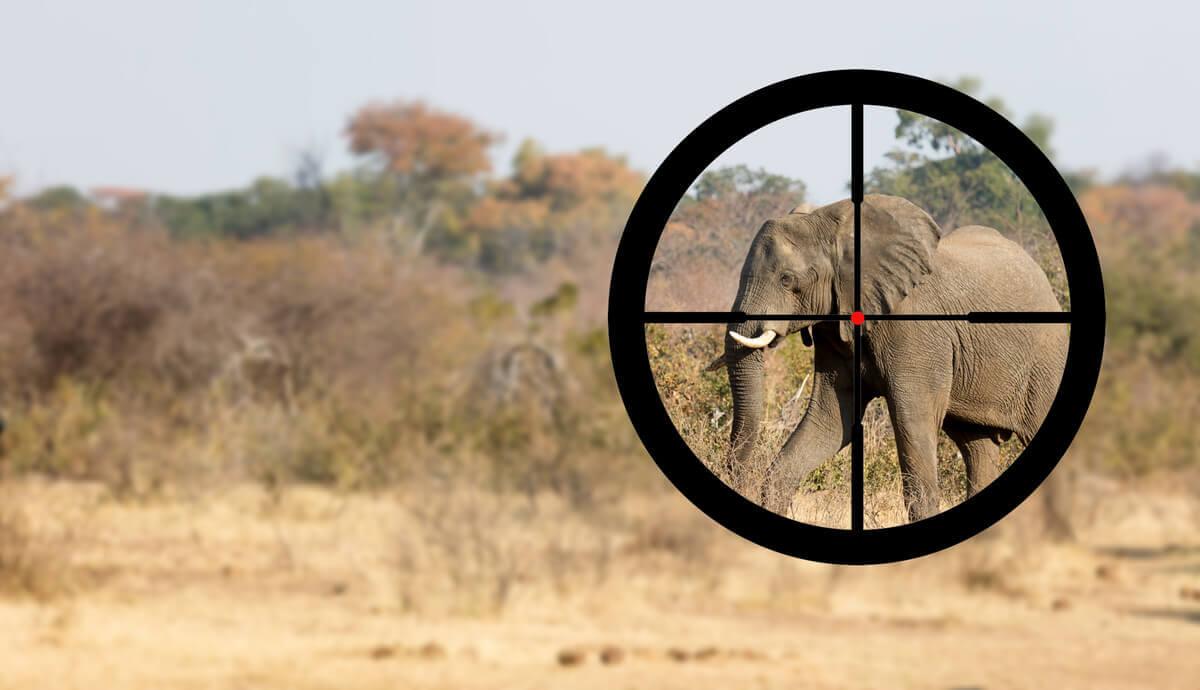 Proteger os elefantes da caça furtiva