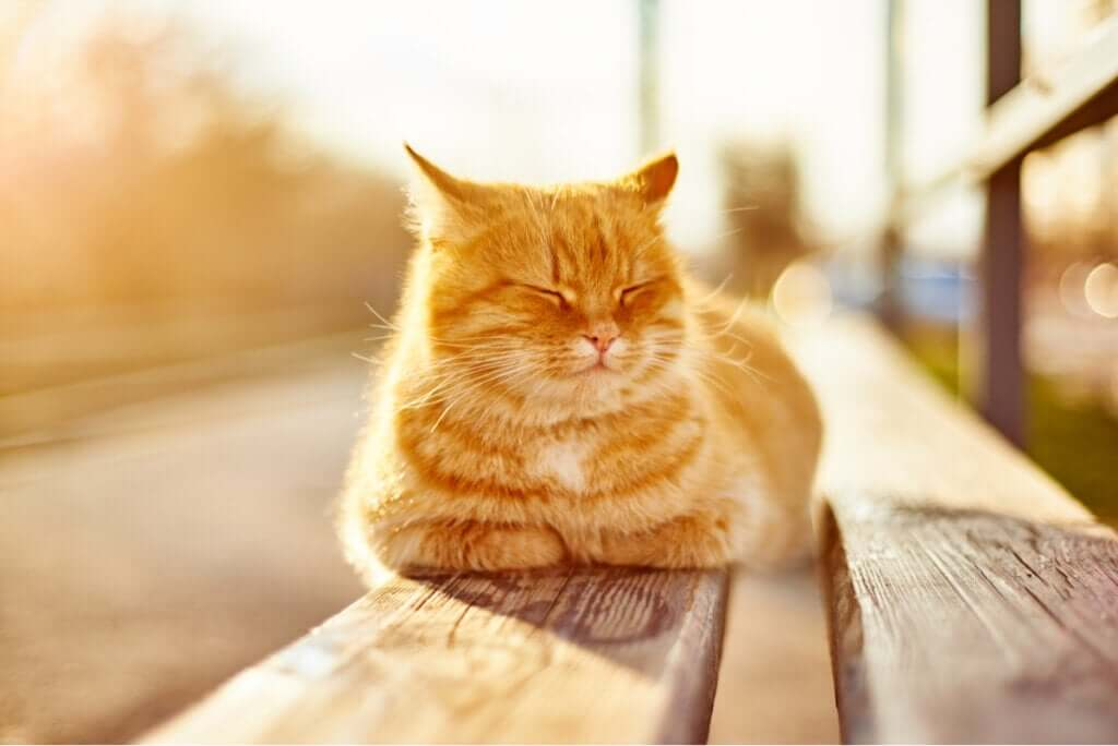 Quais são os benefícios do sol para os animais de estimação?