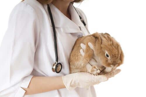 As 4 doenças mais comuns em coelhos