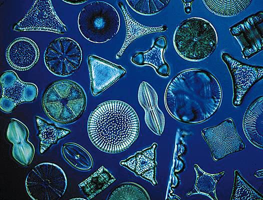 Terra de diatomáceas e cães: quais são seus efeitos?