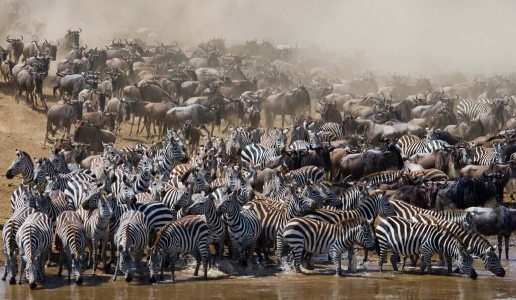 Quais são os animais que migram?