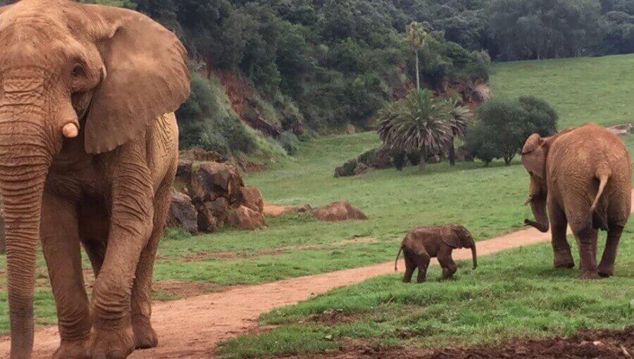 Zoológicos aliados à biodiversidade:conservação 'ex situ'