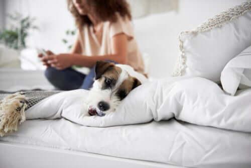 Tipos de anemia em cães