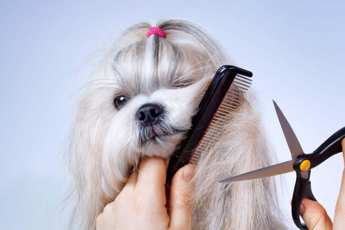 Troca de pelo em cães