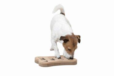 Estimulação mental em cães: uma questão de brincar