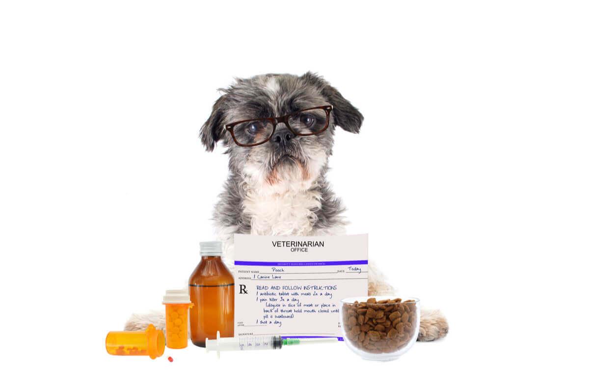 os medicamentos mais perigosos para os cães