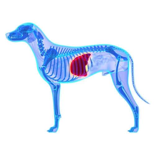 Dietas adequadas para um cão com doença hepática