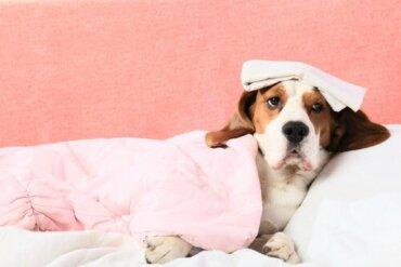 Sangramento interno em cães: como saber?