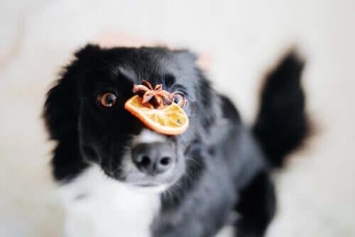 Importância dos antioxidantes na comida para cães