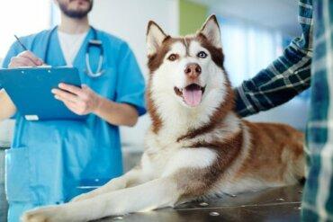 Psoríase em cães: o que fazer?
