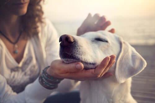Comportamentos dos cães quando são acariciados
