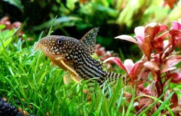4 peixes de fundo ideais para o seu aquário