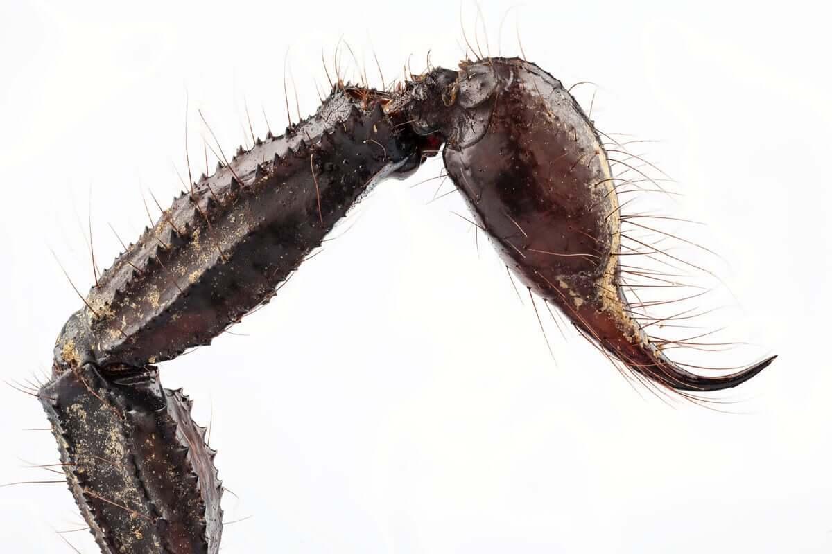 Os escorpiões são animais solitários, noturnos e produzem venenos