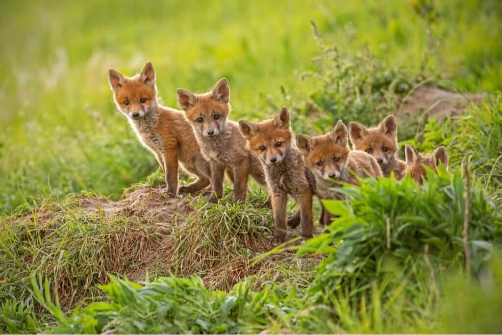 Por que algumas mães comem os próprios filhotes no reino animal?