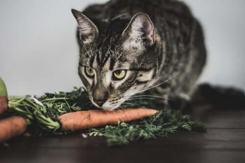 A dieta dos gatos