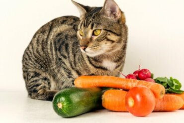 Os gatos podem comer vegetais?