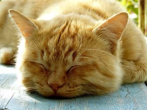 A termorregulação em gatos