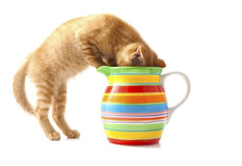 7 substâncias comuns que podem afetar seu gato
