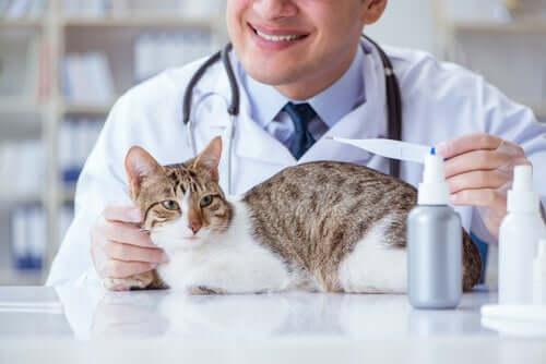 Intoxicação e pupilas dilatadas no gato