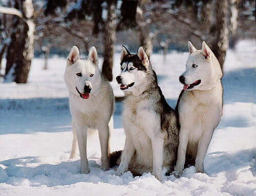 Cães ativos para todos os perfis