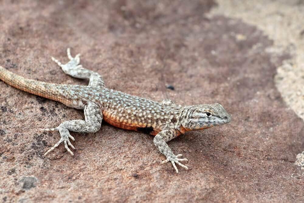 A origem dos répteis: a classe Reptilia
