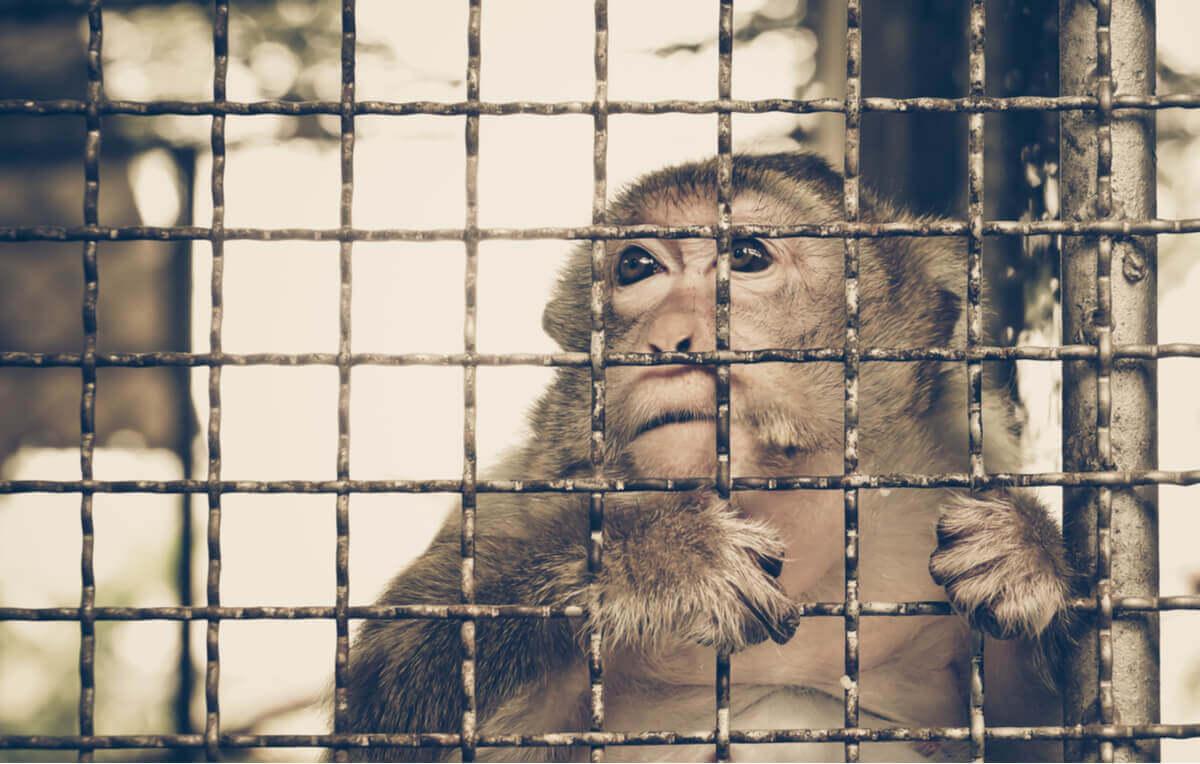 Os efeitos do comércio ilegal sobre as espécies animais