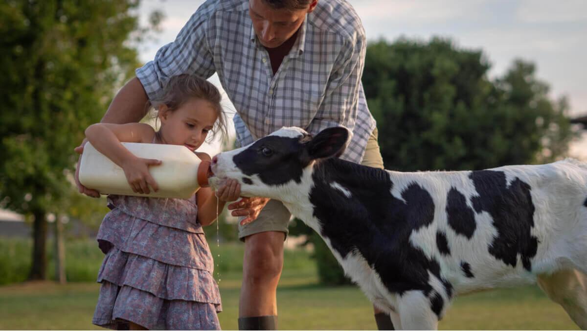 A imunidade do bezerro: o desmame em bovinos