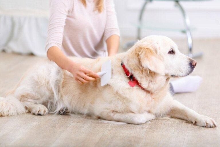 Troca de pelo em cães: quanto tempo dura?