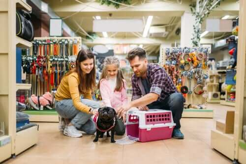 5 perguntas para se fazer antes de adotar um cachorro