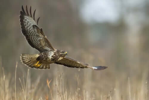 Cuidados intensivos para aves de rapina