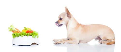 Os cães podem se tornar veganos?