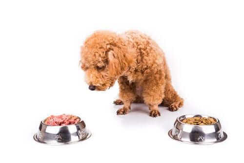 Os cães se cansam de comer a mesma coisa todos os dias?