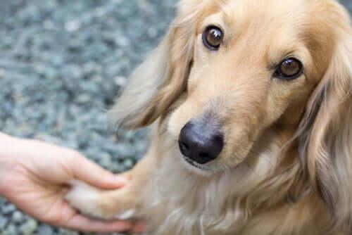 Tremores em cães: por que acontecem?